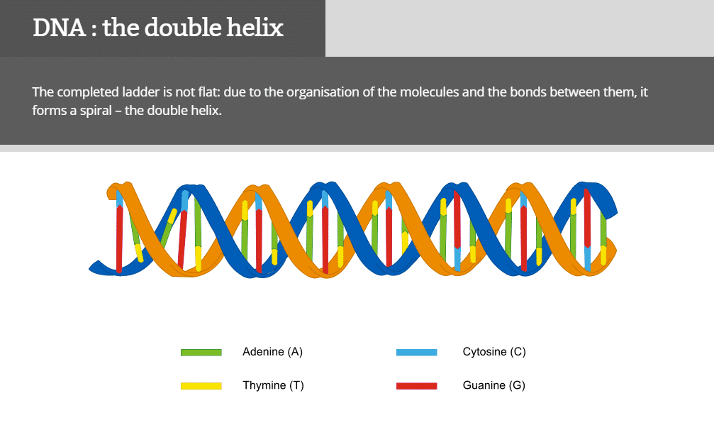 Genes to Genome