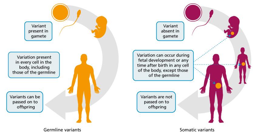 Cancer genomics - Genomics Education Programme