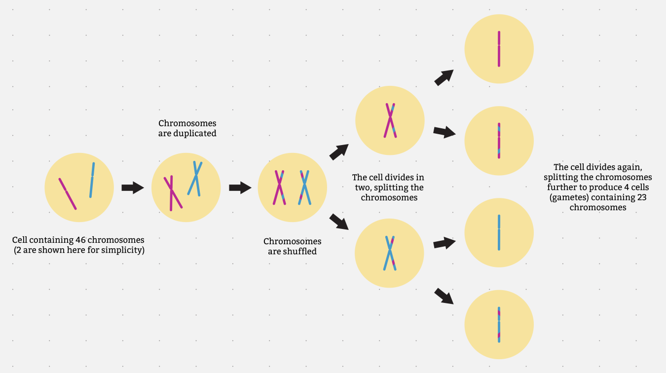 Where does our genome come from? - Genomics Education Programme