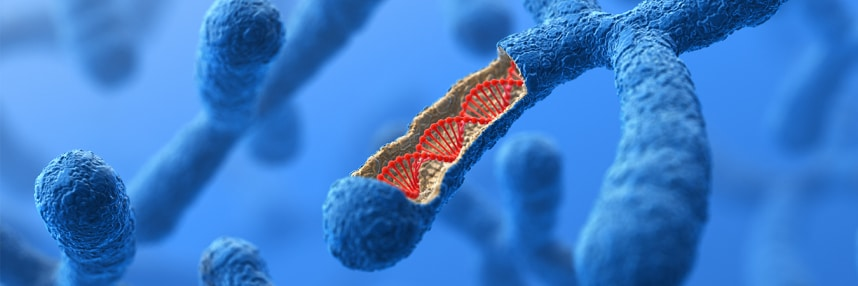 3D render of a chromosome with DNA helix exposed inside