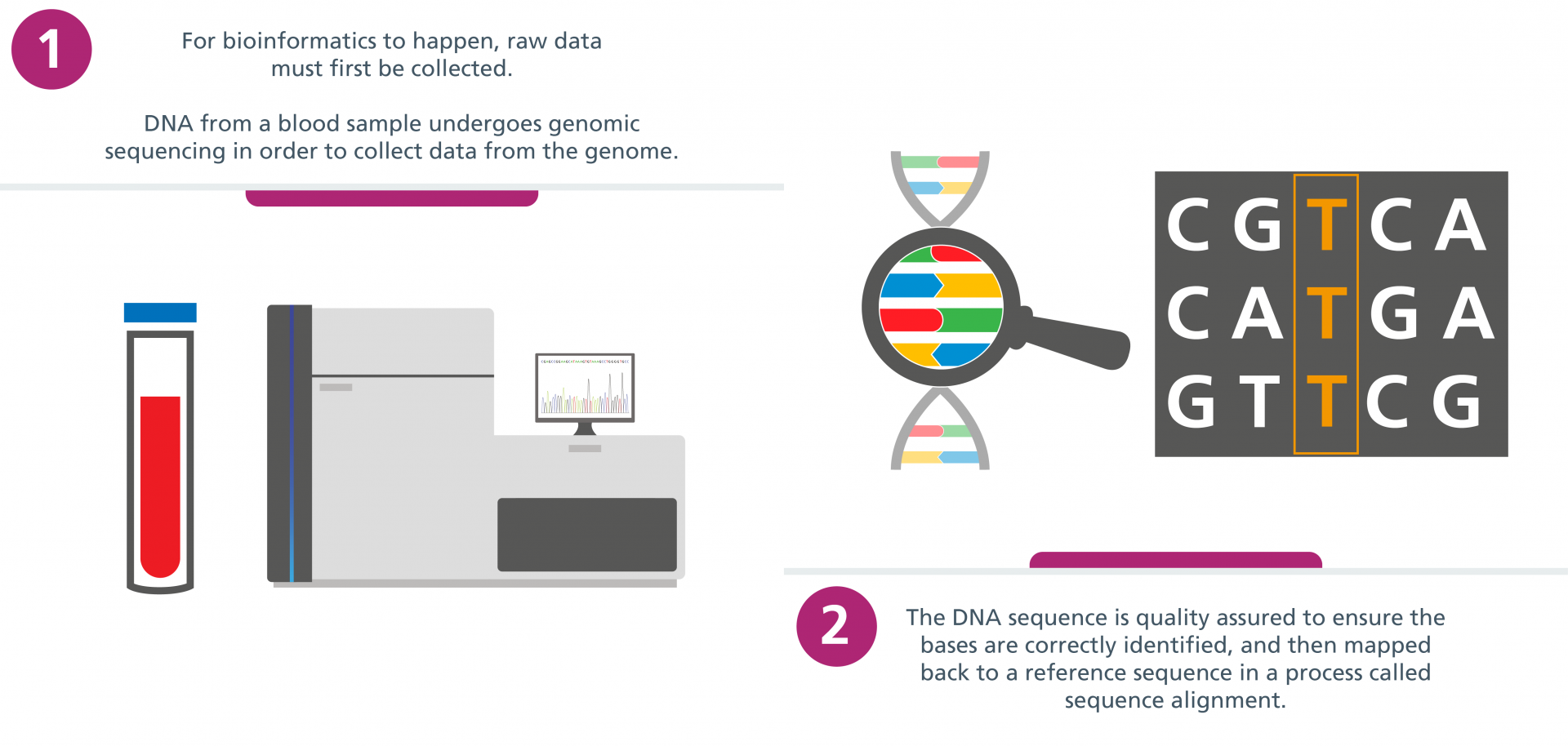 Step 1: For bioinformatics to happen, raw data must first be collected. DNA from a blood sample undergoes genomic sequencing in order to collect data from the genome. Step 2: The DNA sequence is quality assured to ensure the bases are correctly identified, and then mapped back to a reference sequence in a process called sequence alignment.