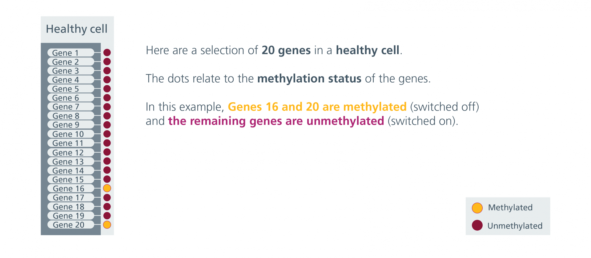 A selection of 20 genes in a healthy cell. Genes 16 and 20 are methylated (switched off) and the remaining genes are unmethylated (switched on).
