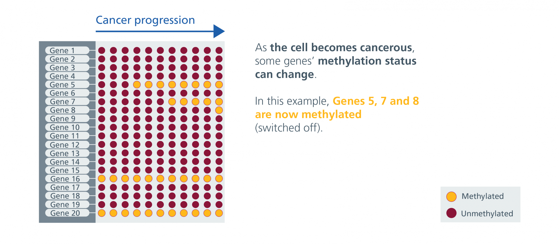 The cell becomes cancerous and the methylation status of some of the 20 genes begins to change. Genes 5, 7 and 8 are now methylated (switched off).