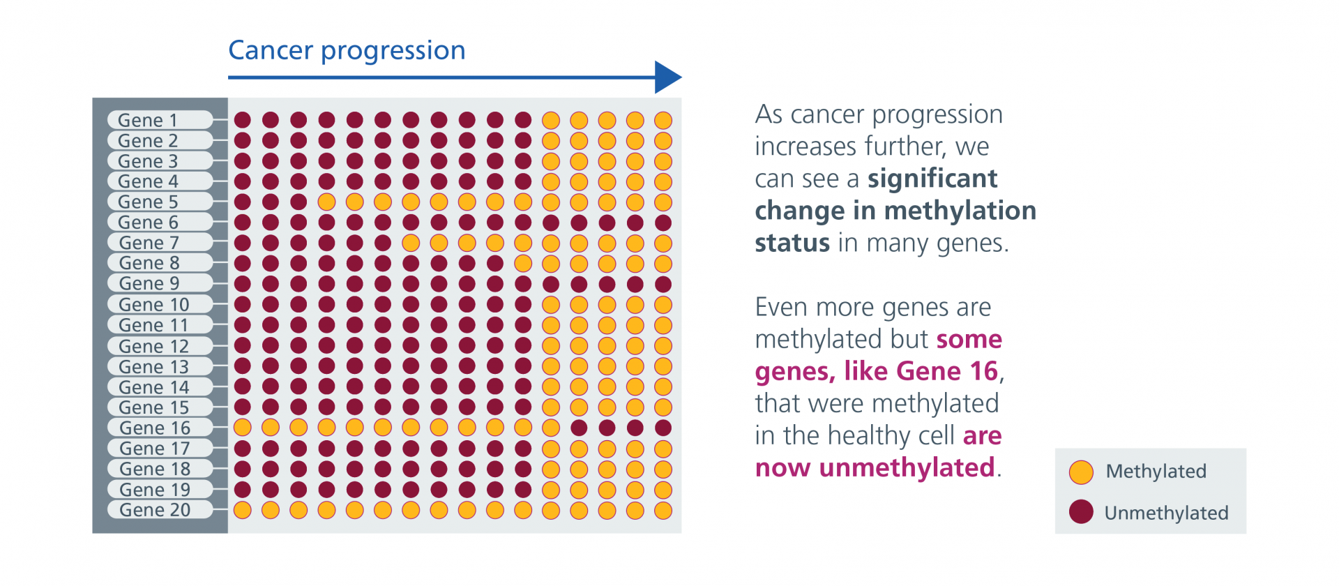Cancer progresses further and methylation change continues. Even more genes are methylated but some genes that were methylated in the healthy cell are now unmethylated.